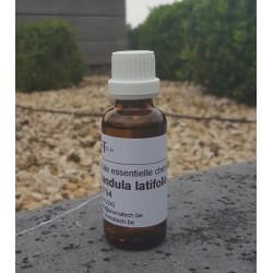 Lavandula latifolia spica (aspic)